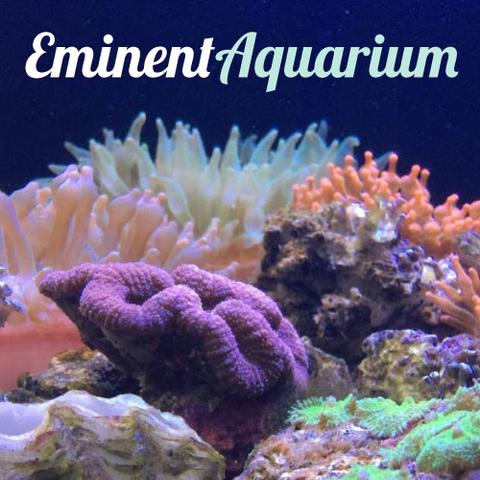 eminent aquarium website design